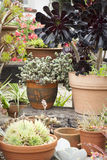 Potted succulents at garden centre Royalty Free Stock Images