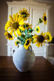 Potted sunflowers stock photography