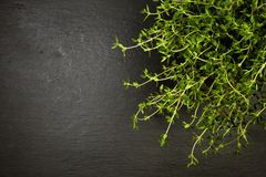 Potted thyme plant on slate with copyspace Royalty Free Stock Image