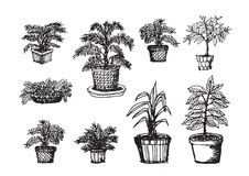 Potted Tree Stock Image
