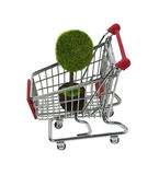 Potted Tree in Shopping Cart Stock Photography