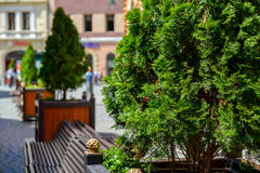 Potted trees and benches together. In a summer day Royalty Free Stock Photos