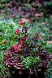 Potten en vazen met diverse groene installaties in een behandeld milieu Stock Afbeelding