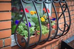 Potten met de zomerbloemen royalty-vrije stock foto