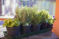 Potten van aromatische planten op openluchtlijst stock fotografie
