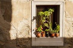 Potten van bloemen op de vensterbank Stock Fotografie