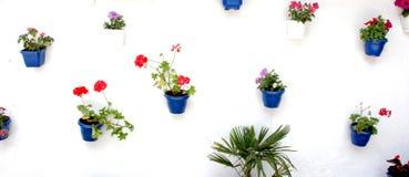 potten van bloemen op een witte muur Stock Afbeelding