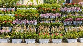 Potten van bloemen op vakantiebloemen in Baku Stock Afbeeldingen