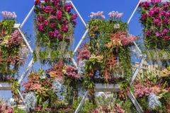 Potten van bloemen op vakantiebloemen in Baku Stock Foto's