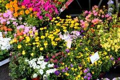 Potten van bloemen op verkoop in de bloemistenmarkt Royalty-vrije Stock Afbeelding
