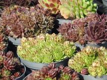 Potten van bloemen succulents installaties van de muren Royalty-vrije Stock Fotografie
