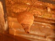 Pottenbakkerswesp India Stock Afbeeldingen