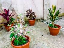 pottenbloemen Stock Foto's