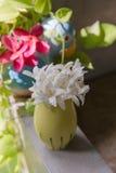 Pottenboom Royalty-vrije Stock Afbeeldingen