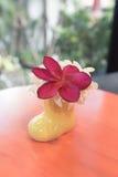 Pottenboom Royalty-vrije Stock Afbeelding