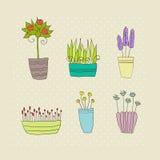 Potteninstallaties met bloemen en bladeren Royalty-vrije Stock Foto