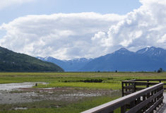 Potter Marsh Wildlife Refuge Anchorage Alaska Stock Images