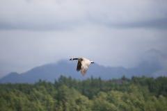 Potter Marsh Wildlife Refuge Anchorage Alaska royalty free stock photo