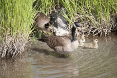 Potter Marsh Wildlife Refuge Anchorage Alaska Stock Photo