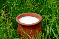 Potters jug with milk in a grass Stock Photo