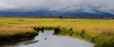 Potter's Marsh Alaska royalty free stock image