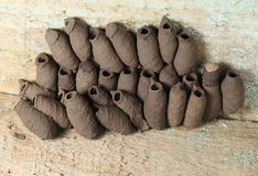 Potter wasp colony Royalty Free Stock Photo