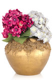 Pottery vase with flowers. Royalty Free Stock Photos
