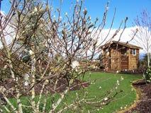potting εικόνας κήπων έριξε το από&t Στοκ Εικόνες