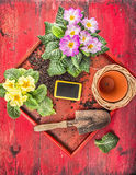 Potting λουλουδιών με την παλαιά σέσουλα, το δοχείο λουλουδιών και ο κήπος υπογράφουν στον κόκκινο αγροτικό ξύλινο δίσκο Στοκ Φωτογραφία