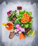 Potting λουλουδιών Primula που τίθεται με τα δοχεία, το φτυάρι και το κόκκινο σημάδι Στοκ Φωτογραφίες