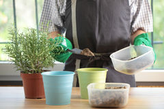 Potting Stock Photos