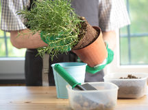 Potting Royalty Free Stock Image