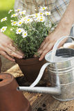 Potting Stock Images