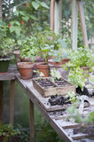 Potting Crate In Greenhouse Stock Image