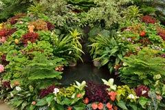 Potting Flower Display Stock Photography