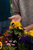 Potting flowers Stock Photos
