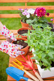 Potting flowers Stock Photo