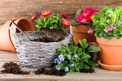 Potting flowers in springtime Royalty Free Stock Photos
