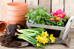 Potting fresh flowers in springtime Royalty Free Stock Photography