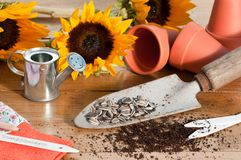 In The Potting Shed. With sunflower seeds and plants with watering can and tools Stock Image