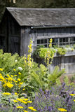 Potting Shed with Flowers Royalty Free Stock Photo