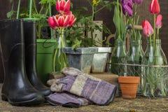 Potting Shed Garden Scene background Royalty Free Stock Images