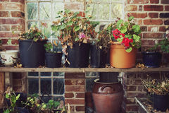 Potting Shed Stock Images