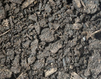 Potting Soil Macro Royalty Free Stock Images