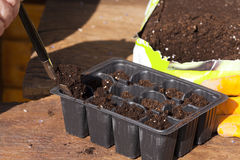 Potting soil in small plastic plant trays Royalty Free Stock Image