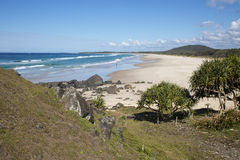 Pottsville Beach and Pandanus Palms Royalty Free Stock Images