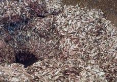 Poubelle d'entrée à une usine de farine de poisson Photo stock