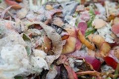 Poubelle de compost dans le jardin ; nourriture de cuisine, légume et thyristor de fruit Image stock