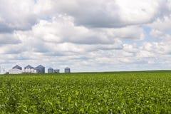 Poubelles de grain et culture de haricot de soja Photographie stock libre de droits