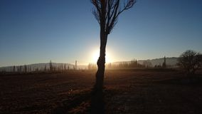 Pouca árvore Foto de Stock